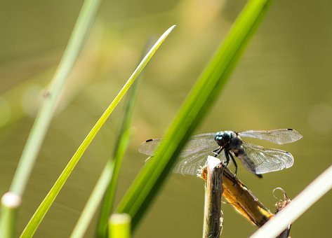 Dragonfly, Mood, Wallpaper, Insect, Nature, Background