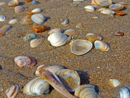 Shell, Beach, Sand, Sand Beach, Sword Shell, North Sea