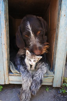 Dog And Cat, Animals, Dog, Kitten, Humanity