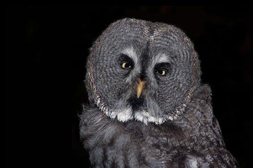 Owl, Bird, Eagle Owl, Feather, Animal, Night Active