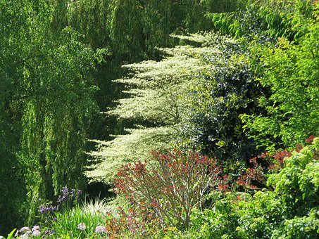 Beth Chatto, Gardens, Dogwood, Trees, Nature, Forest