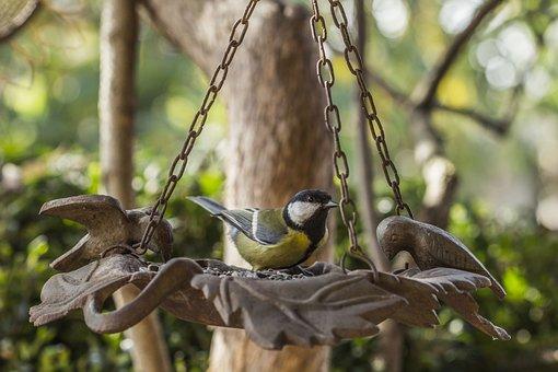 Great Tit, Tit, Bird, Feeder, Yellow, Beak, Spring