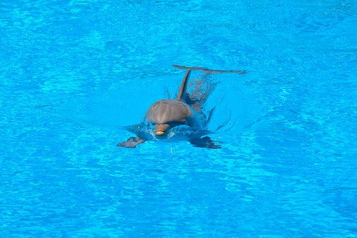 Dolphin, Swim, Water, Blue, Jump, How, Dolphinarium