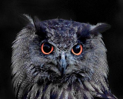 Owl, Eagle Owl, Animal, Bird, Feather, Lighted Eyes