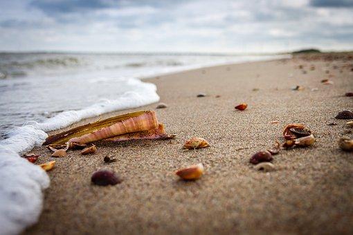 Beach, Sea, Shell, Sand, Holiday, Clouds, Sword Shell