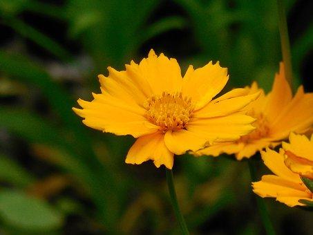 Flower, Perennial, Plant, Green, Spring, Floral, Garden