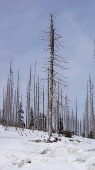 Winter, Three Chair, Bark Beetles, Snow, Nature