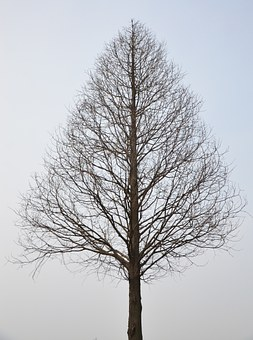 Tree, Withered, Branch, Winter, No Leaves, Silhouette