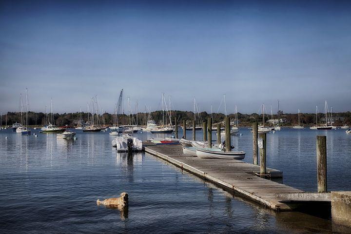 Connecticut, Long Island Sound, Boat, Harbor, Dog