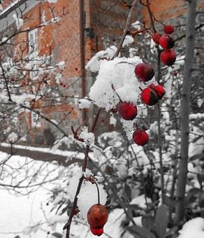Winter, Winter Magic, Berry Red, Eiskristalle, Cold