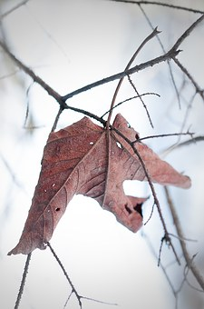 Leaf, Withered, Dry, Leaves, Brown, Nature, Winter, Fog