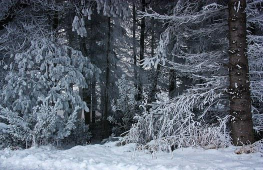 Forest, Winter, Snow, Ice, Hoarfrost, Frost, Wintry