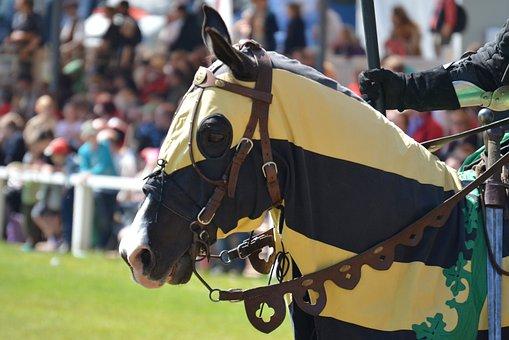 Horse, Knight Festival, Animal Portrait, Pferdeportrait