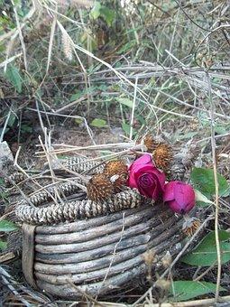 Basket, Roses, Sunflower, Dead, Flowers, Leaves, Dry