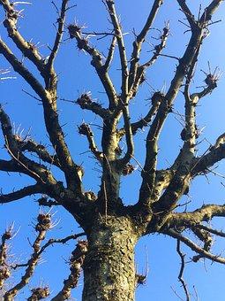 Tree, Kahl, Aesthetic, Sky, Blue, Winter, Crown