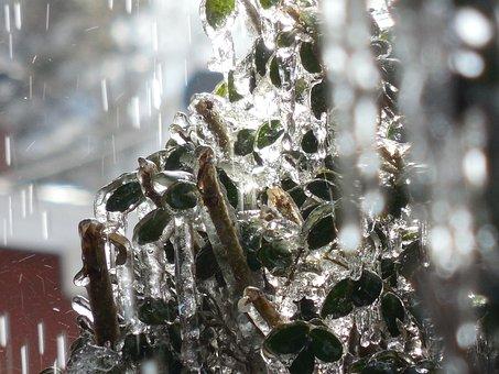 Ice, Rain, Snow, Winter, Freeze, Icy, Water, Freezing