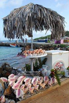 Souvenir, Shells, Conch, Tropical, Water, Seaport