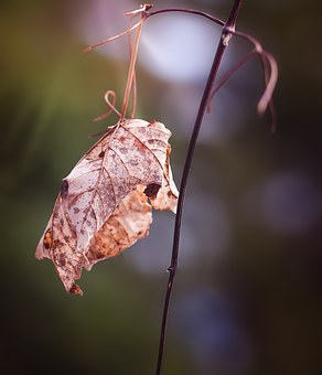 Leaf, Dry, Withered, Autumn, Leaves, Close