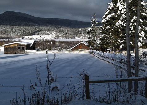 Winter, Scenery, Canim Lake, British Columbia, Canada