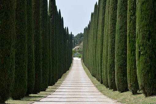 Cypresses, Avenue, Driveway, Trees, Access