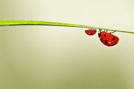 Ladybug, Red, Green, Bug, Nature, Little, Colorful