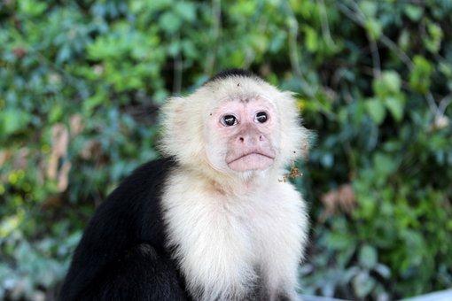 Monkey, Jungle, Animal, Mammal, Wildlife, Brown