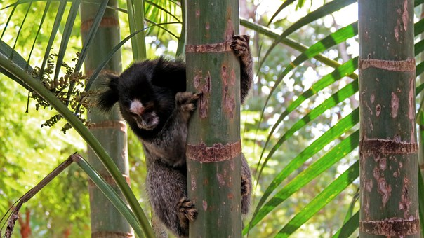 Monkey, Tree, Nature, Trip, Landscape, Forest, Trunk