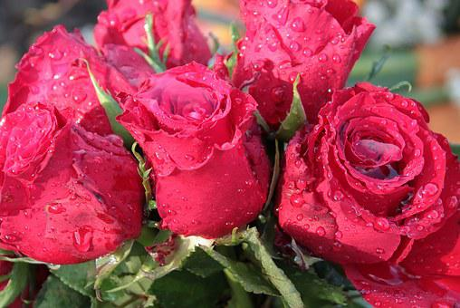 Bouquet Of Roses, Roses, Bouquet, Flowers, Rose Bloom
