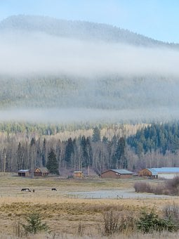 Early Morning, Frosty, Landscape, Scenery, Foggy, Frost