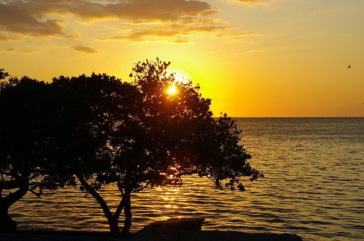 Mexico, Logwood, Green Flash, Seaside, Sunset