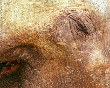 Elephant, Elephant Skin, Animal, Africa, Wrinkled, Skin