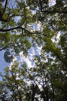 Ppt Backgrounds, Big Trees, Blue Sky