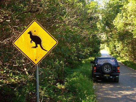 Australia, Kangaroo, Cangaroo, Dinosaur, Jurassic Park