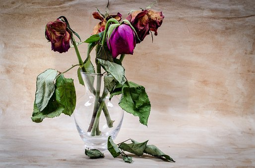 Flower, Dead, Wither, Rose, Death, Decoration, Bud