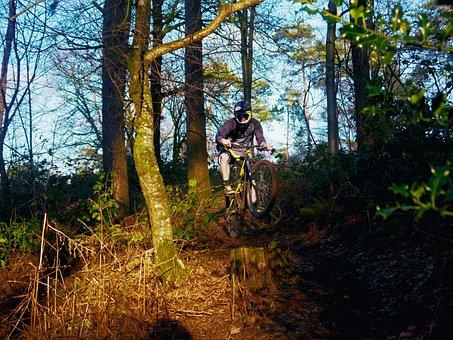Mountain Bike, Sport, Forest, Man, Mountain Bike Tour