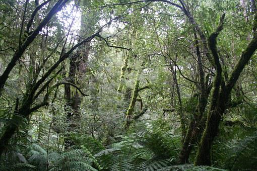 Jungle, Rainforest, National Park, Australia, Forest