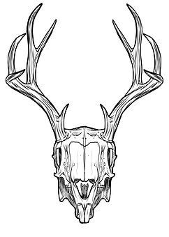 Skull, Horns, Antlers, Rabbit, Jackalope, Fantasy