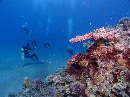 Egypt, Diving, Red Sea, Underwater, Vacations, Divers