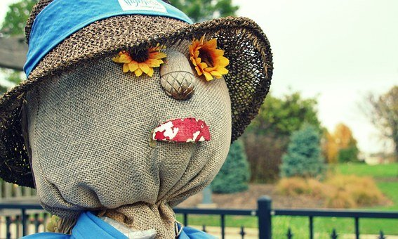 Fall, Scarecrow, Sunflowers, Thanksgiving, Harvest