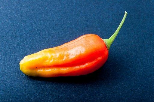 Pepper, Chili, Orange, Bright, Sharp, Pepper Crop, Eat