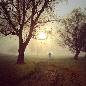 Walk, Landscape, Trees, Sun, Sky, Man, Person, Shadow