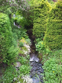Streams, Flowing, Water, Greenery, Plants, Flora