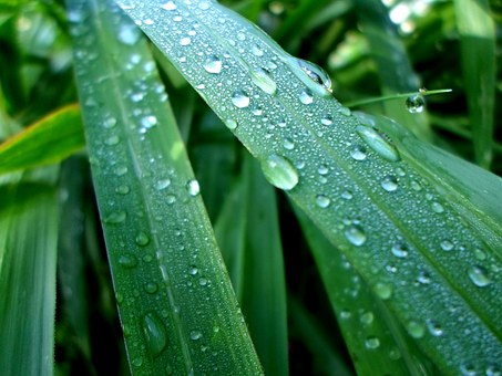 Leaves, Water, Drops, Rainy, Dew, Wet, Greenery, Leafy