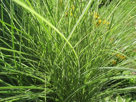 Grasses, Greenery, Plants, Weeds, Greens, Leaves, Leafy