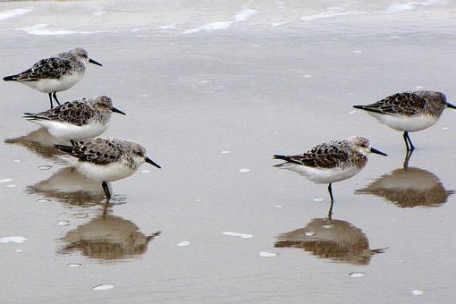 Bird, Water Bird, Sea, Beach, Denmark, Jutland