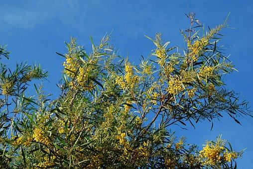 Broom, Yellow, Gorse Blossom, Sky, Plant