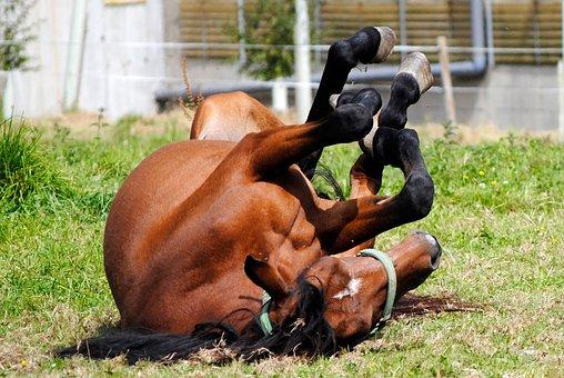 Horse, Mare, Animal, Stallion, Gallop, Brown