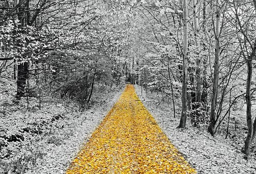 Gold, Footpath, Walking, Walk, Relaxation, Forest, Tree