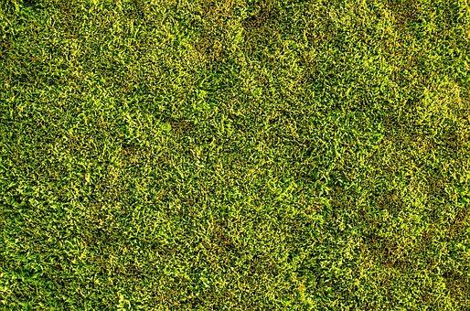 Bush, Green, Wall, Evergreen, Gardening, Shrub, Garden