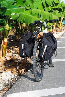 Bicycle, Bike, Biking, Cycle, Cycling, Holiday, Nature